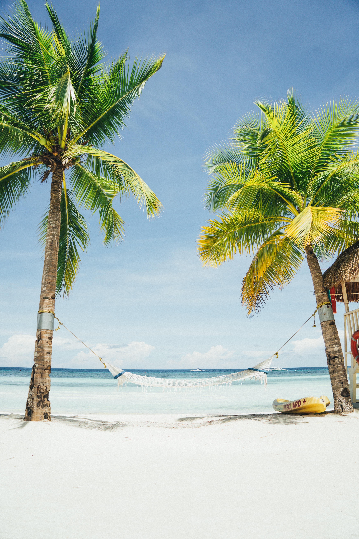 white hammock tied to coconut trees