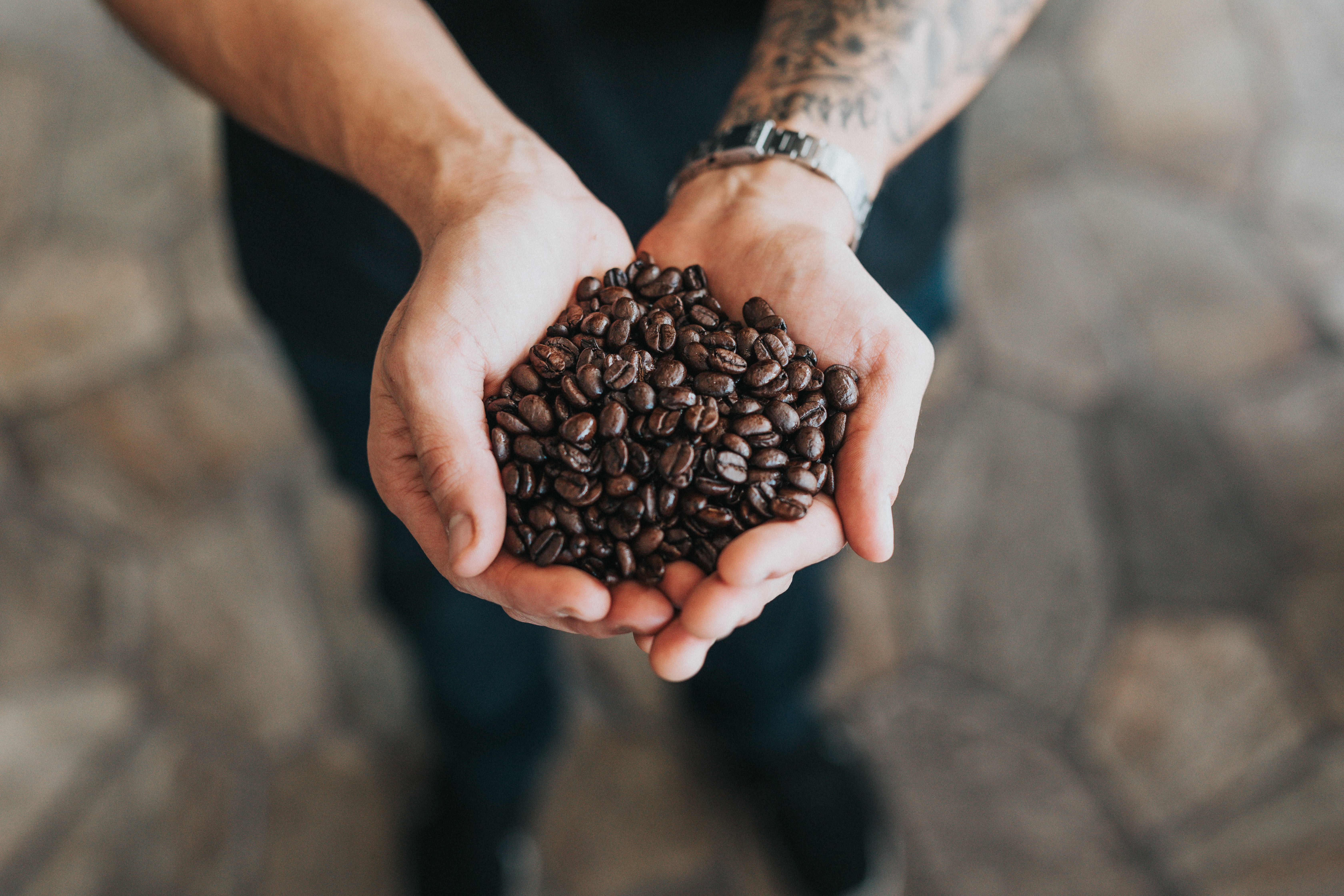 person holding bunch of coffee beans