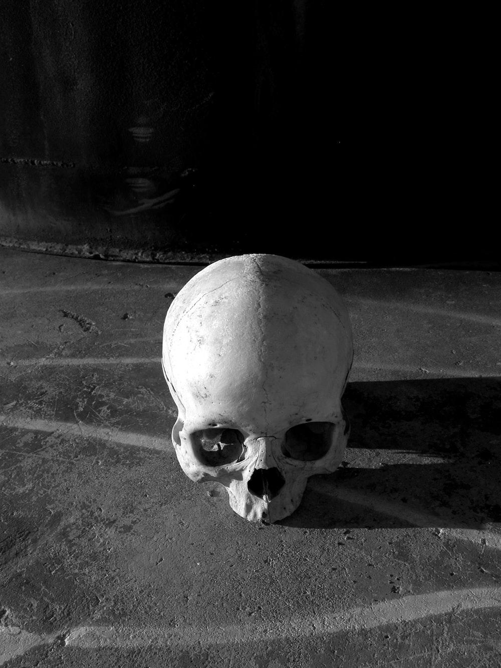 Human skull and shadows hd photo by matt artz mattartz on unsplash