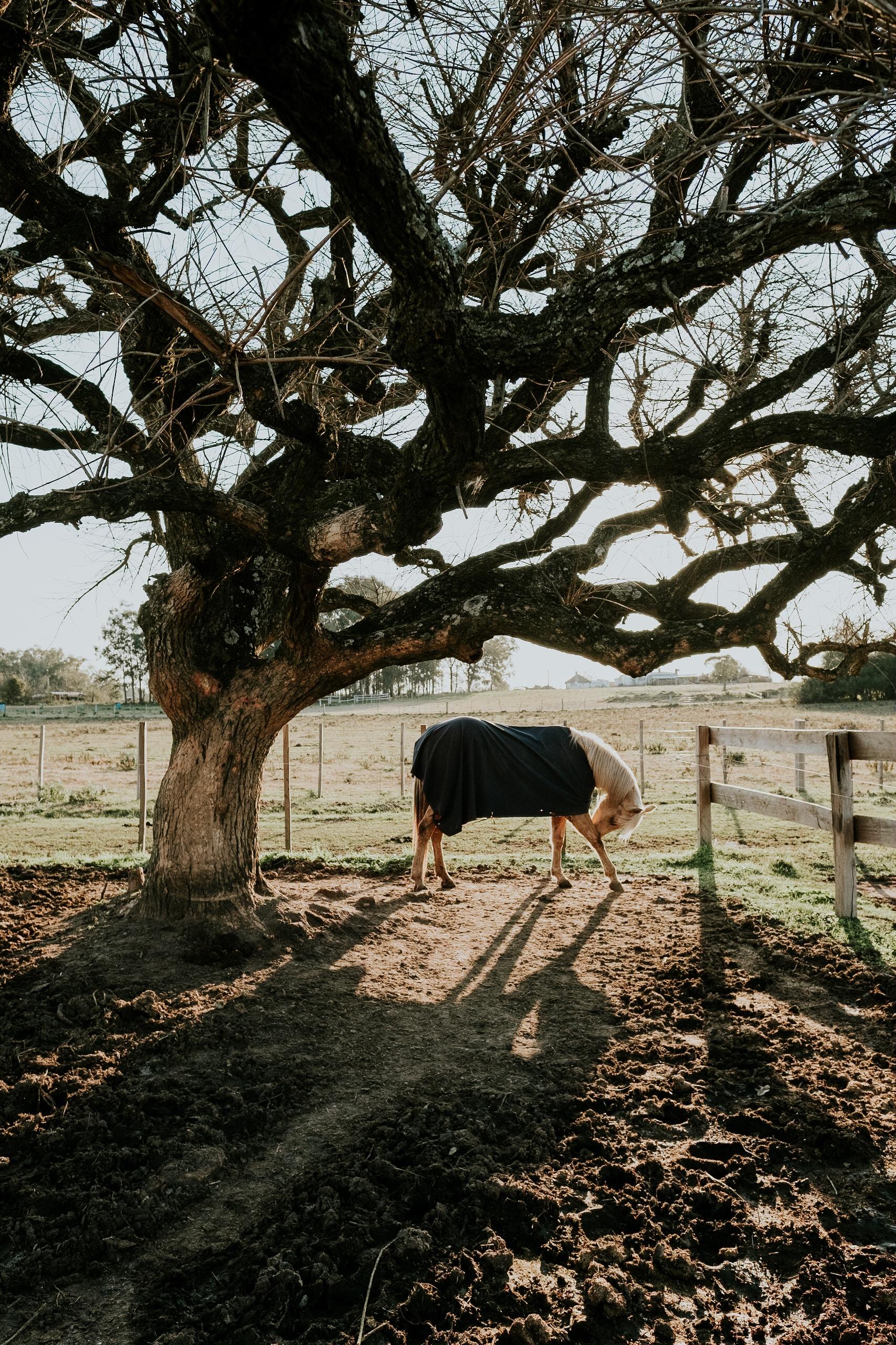white horse beside bare tree at daytime