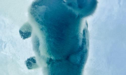 polar bear pickup line