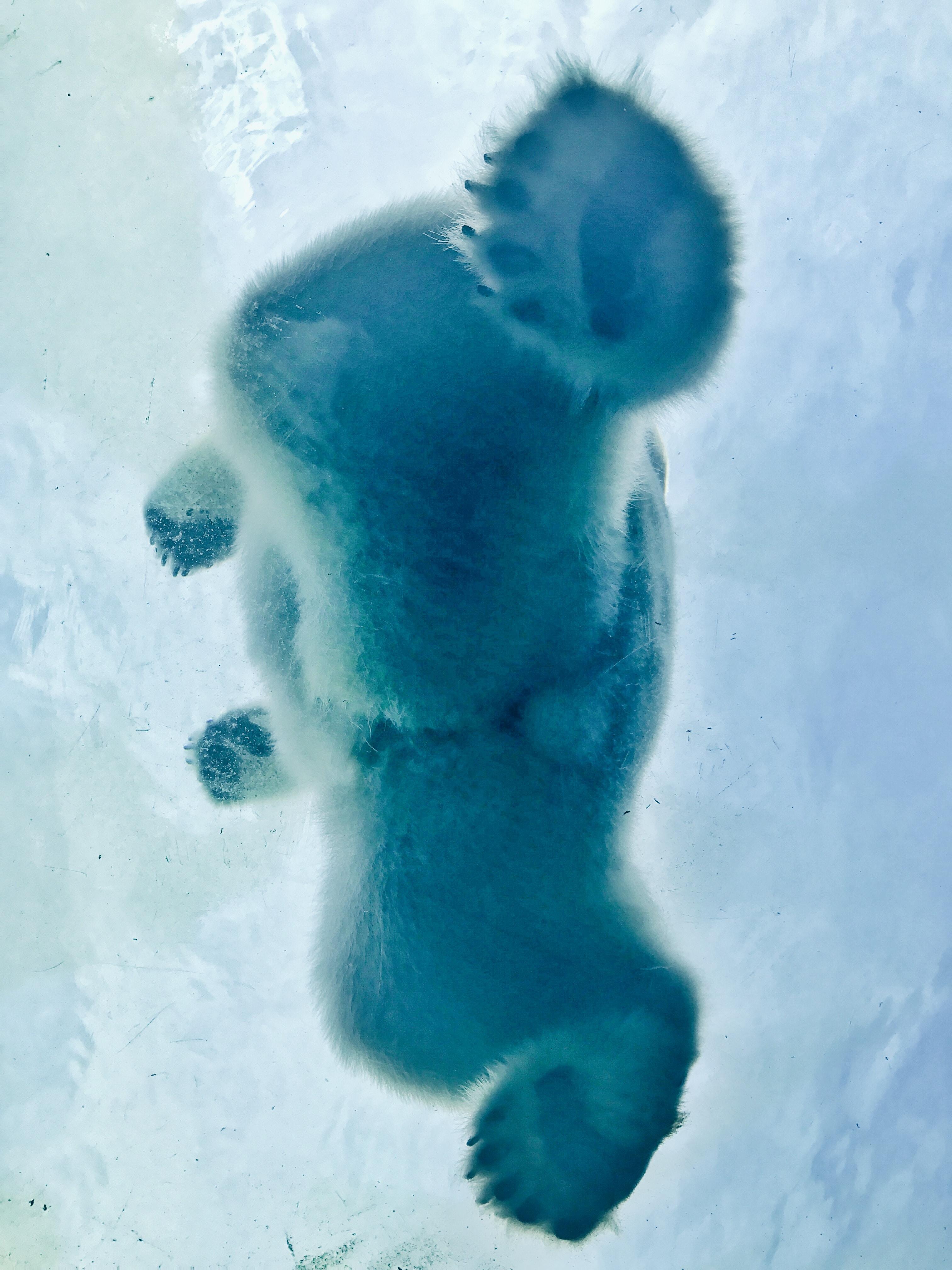 A view from under a polar bear.
