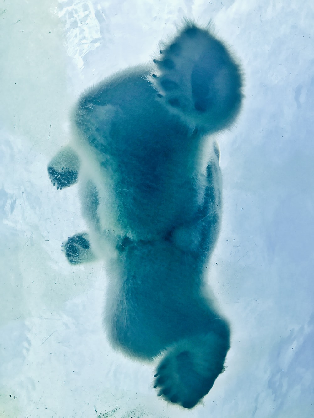 A View From Under Polar Bear