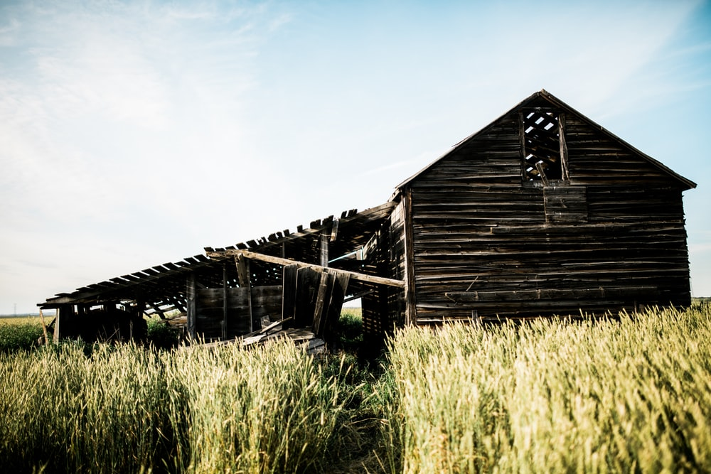 brown wooden barn surrounded green plants