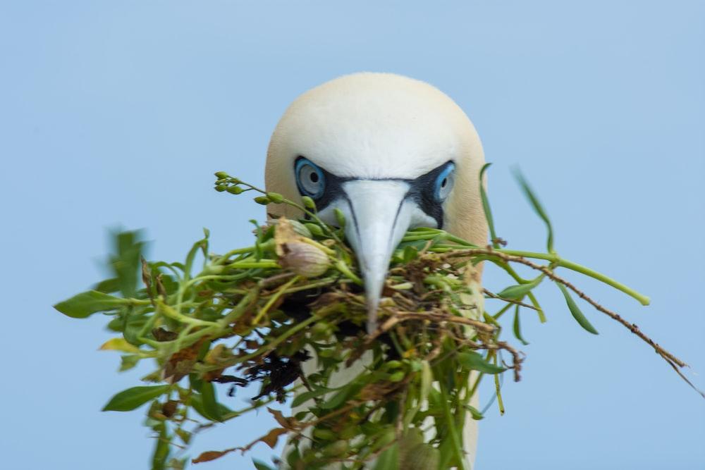 white bird eating green grass