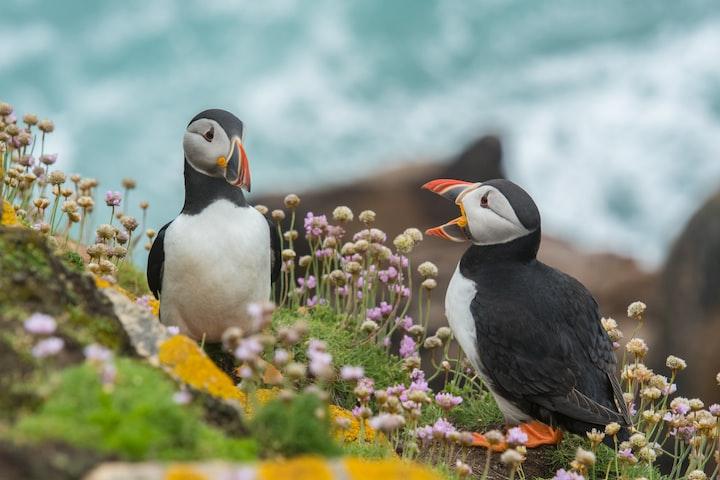 How Birdwatching Can Bring You Joy