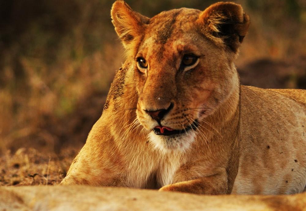 prince of the jungle photo by pop zebra popnzebra on unsplash