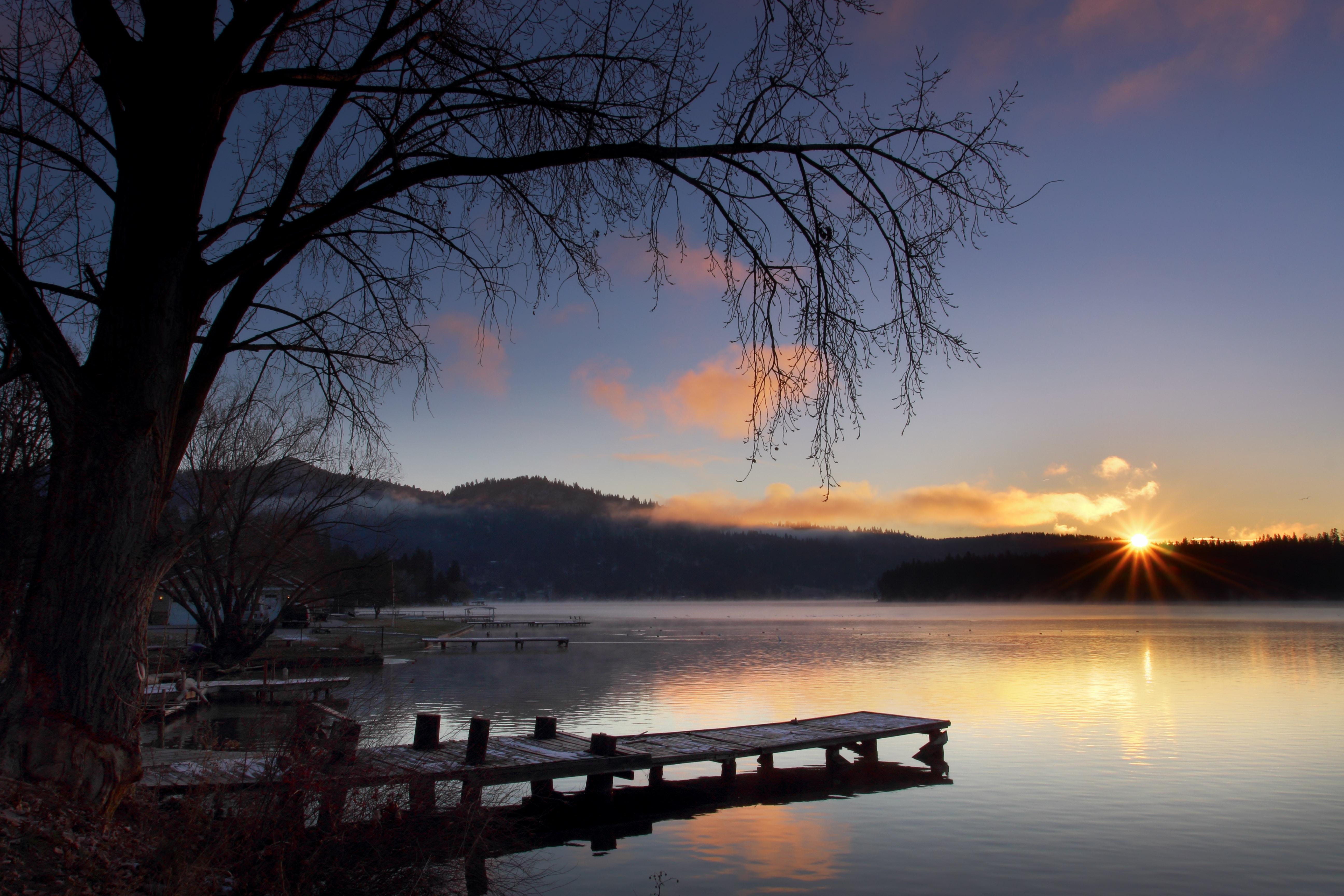 dock near tree during golden hour