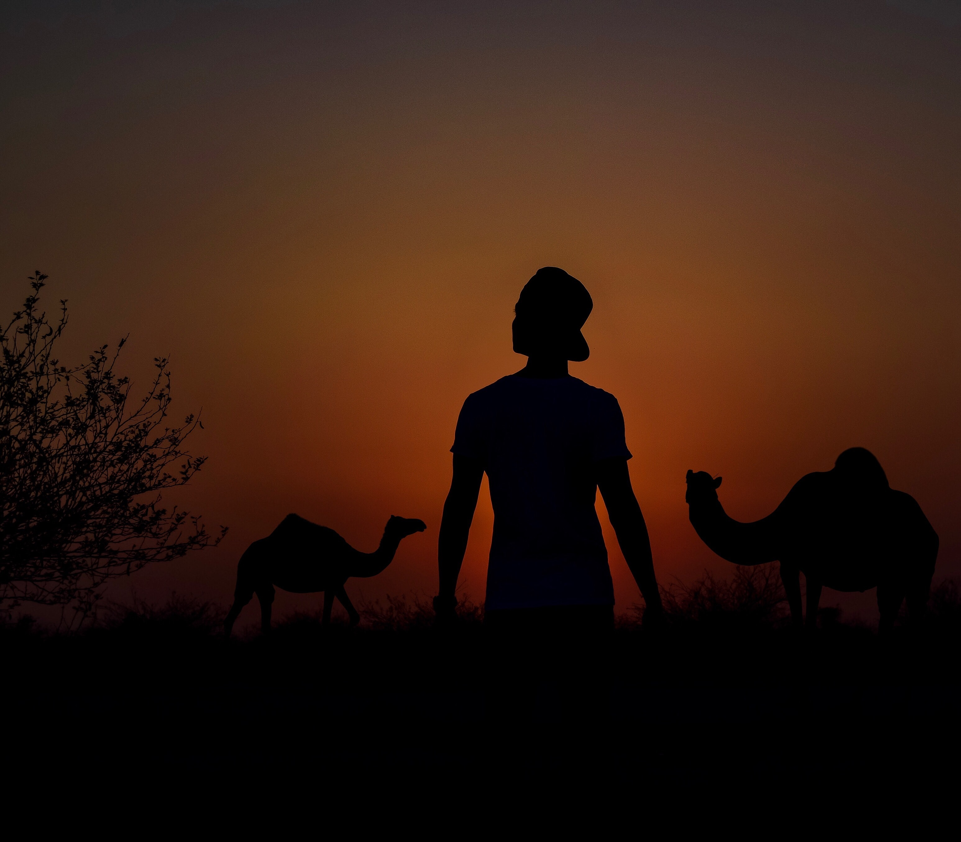 man near camel photo
