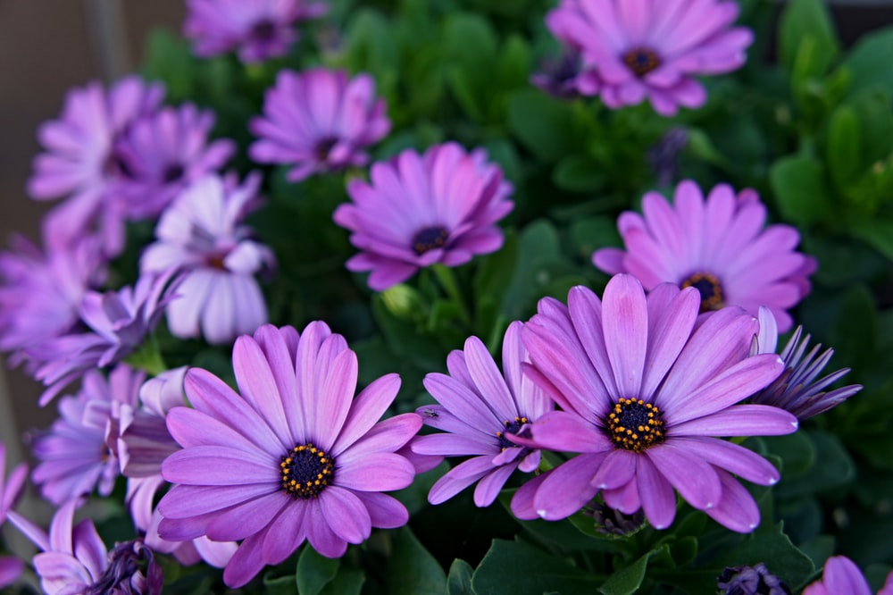 closeup photography of purple clustered flowers