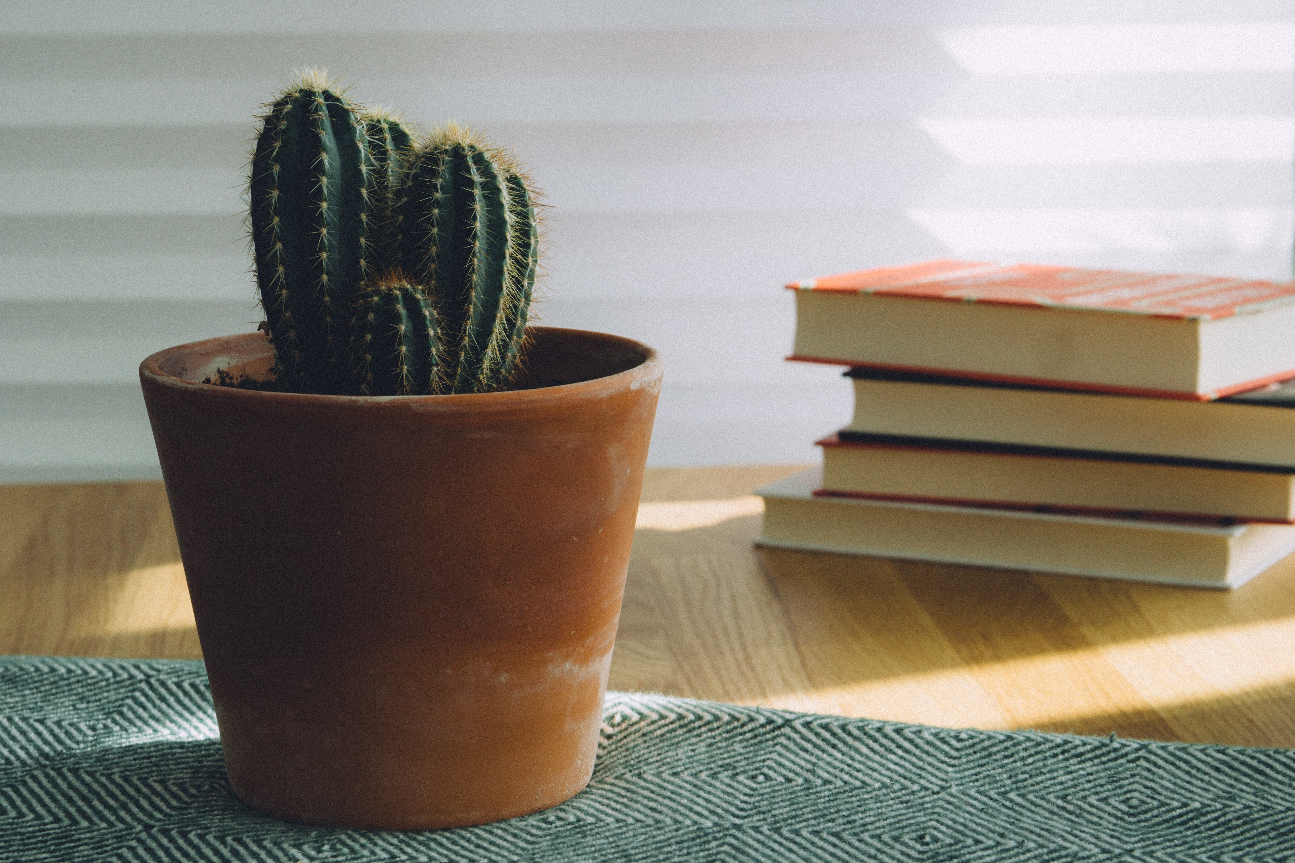 green cactus potted plant