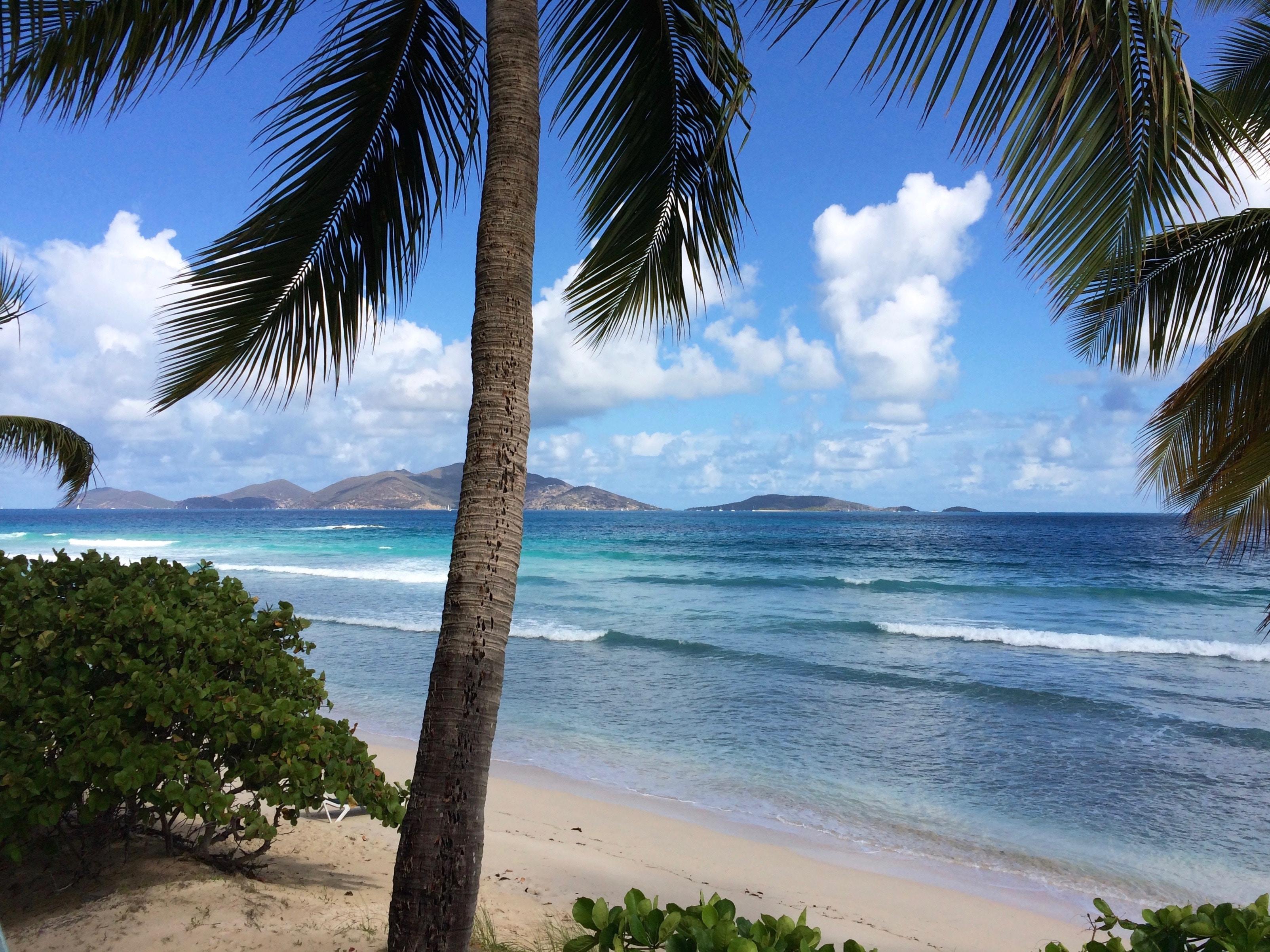 coconut tree on seashore