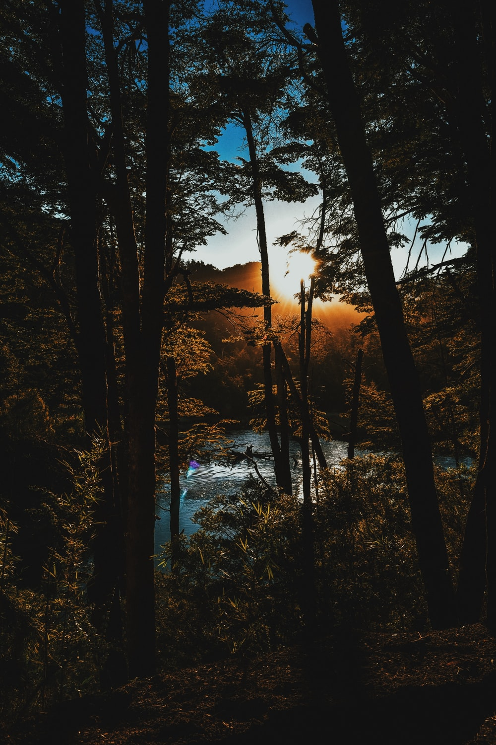 photo of forest near body of water during golden hour