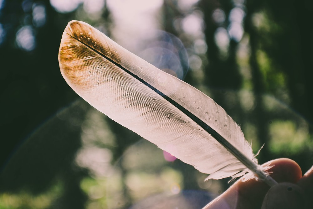 person holding white feather