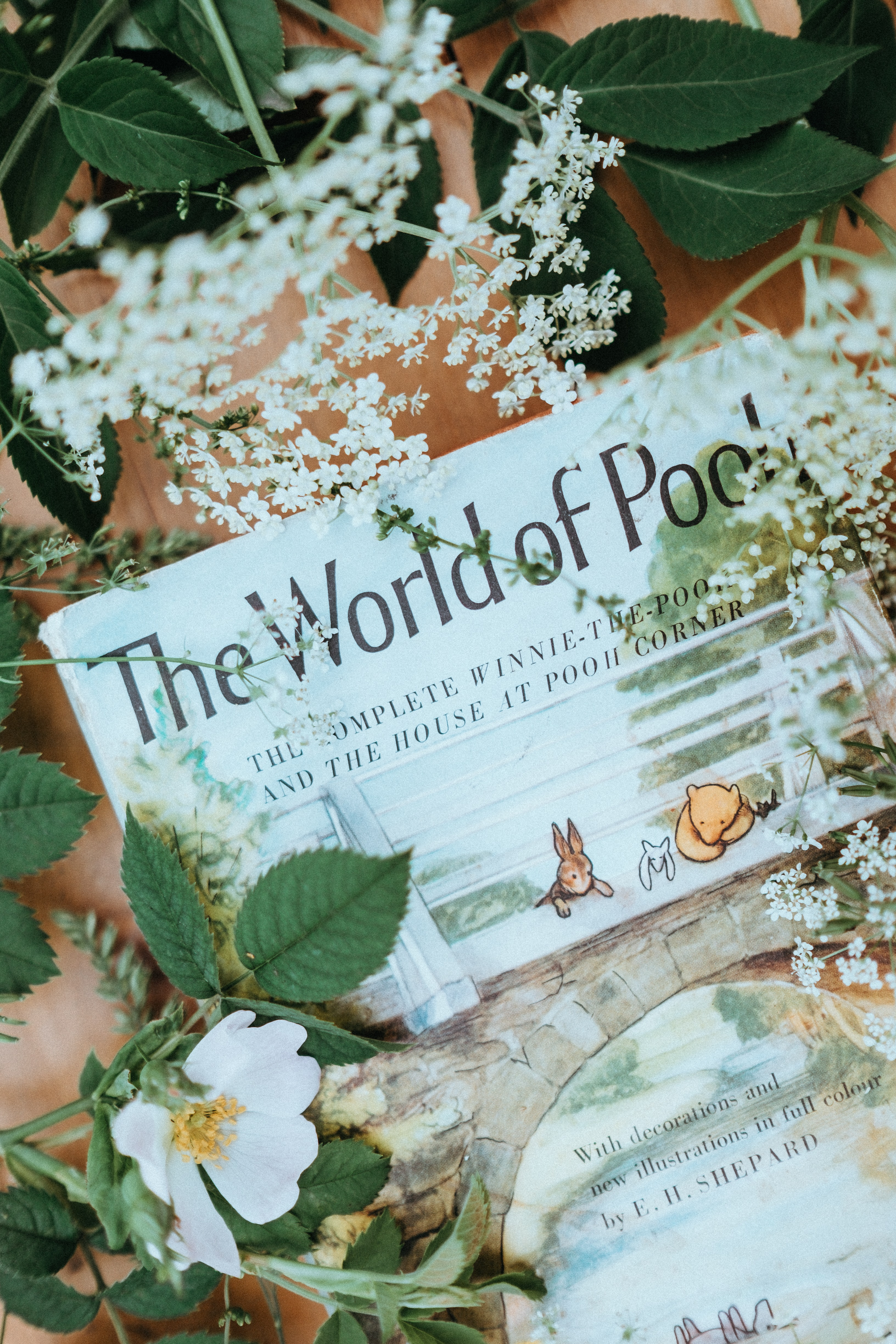 The World of Pool illustration beside flowers