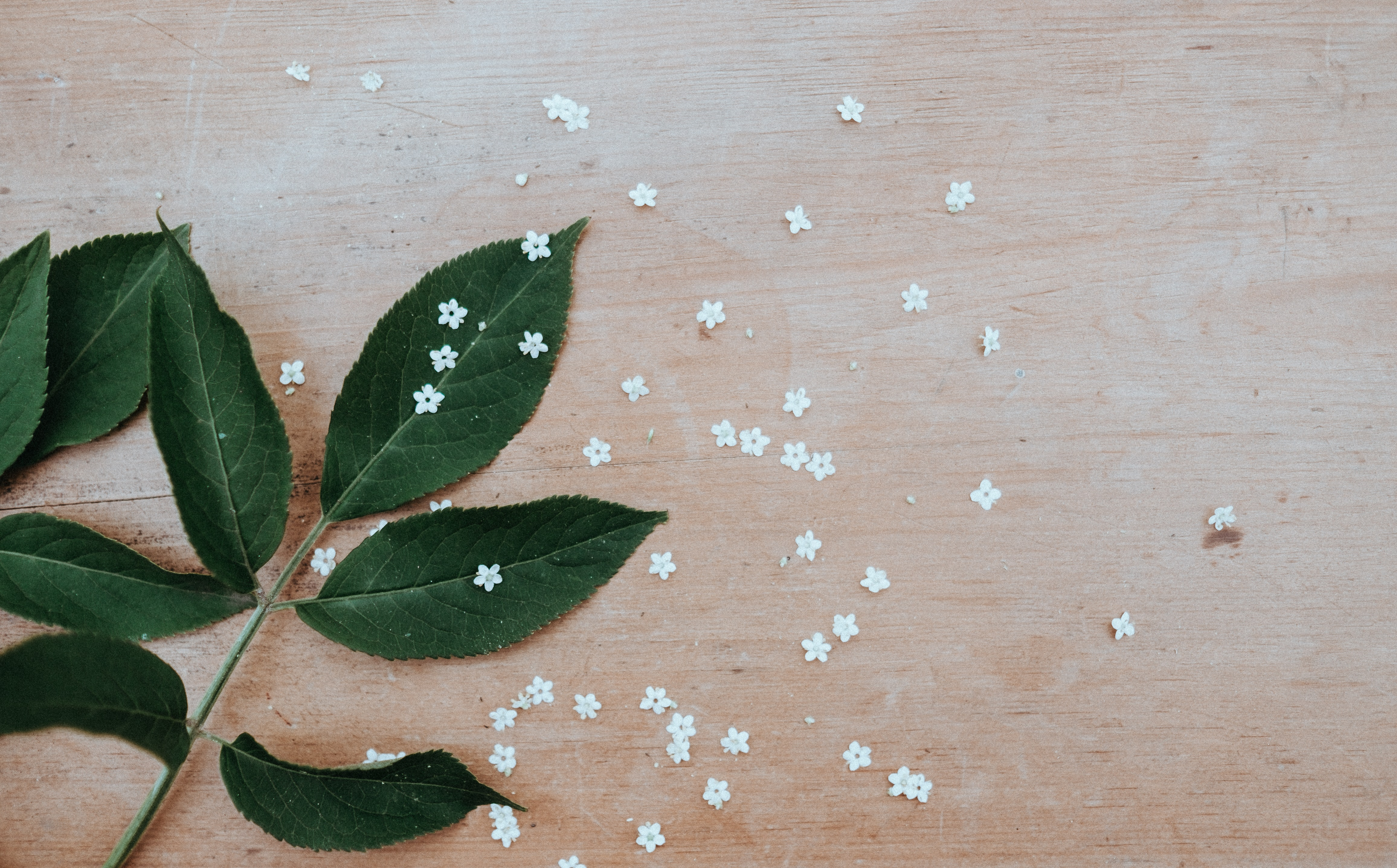white flowers and green leaves on brown surface