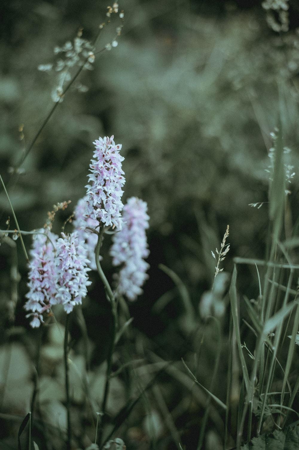 Flower Petals Green And White Hd Photo By Annie Spratt