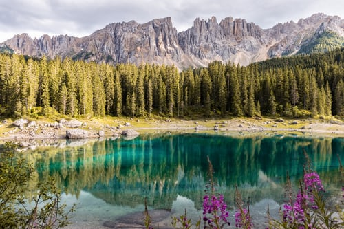 Photo of mountains and trees reflected in a lake, with flowers in the foreground