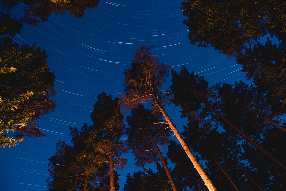 time lapse photography of trees during night time