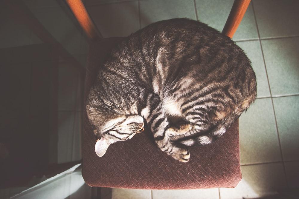 brown tabby cat sleeping on chair