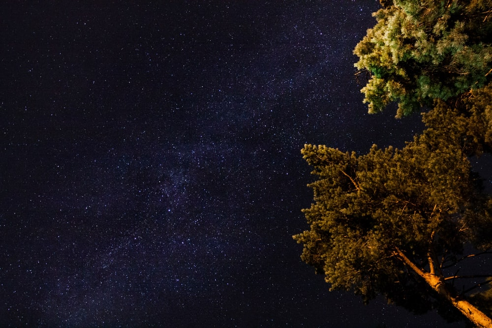 low angle photography of green leaf trees under milky way at nighttime