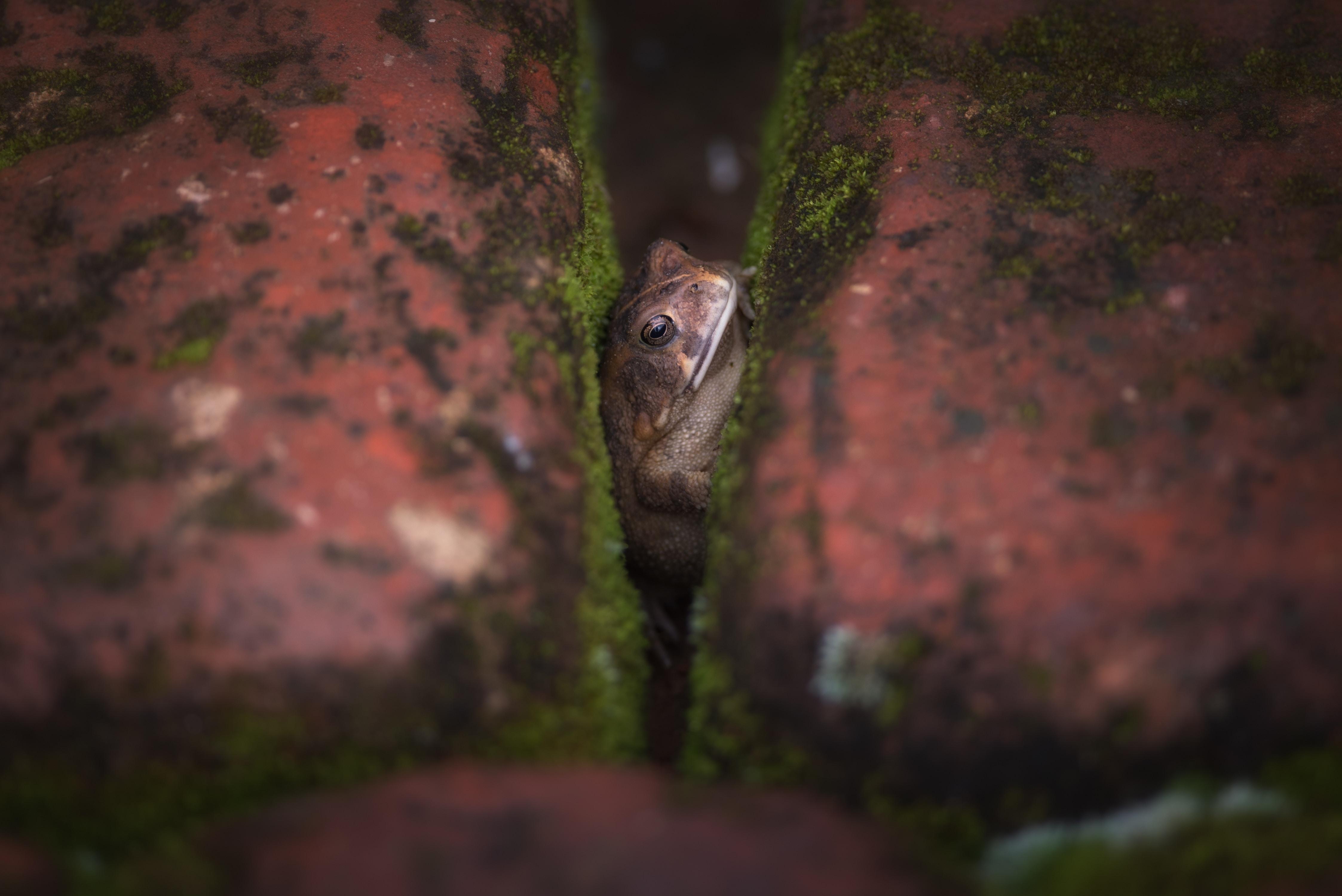 selective focus photography of frog between blocks