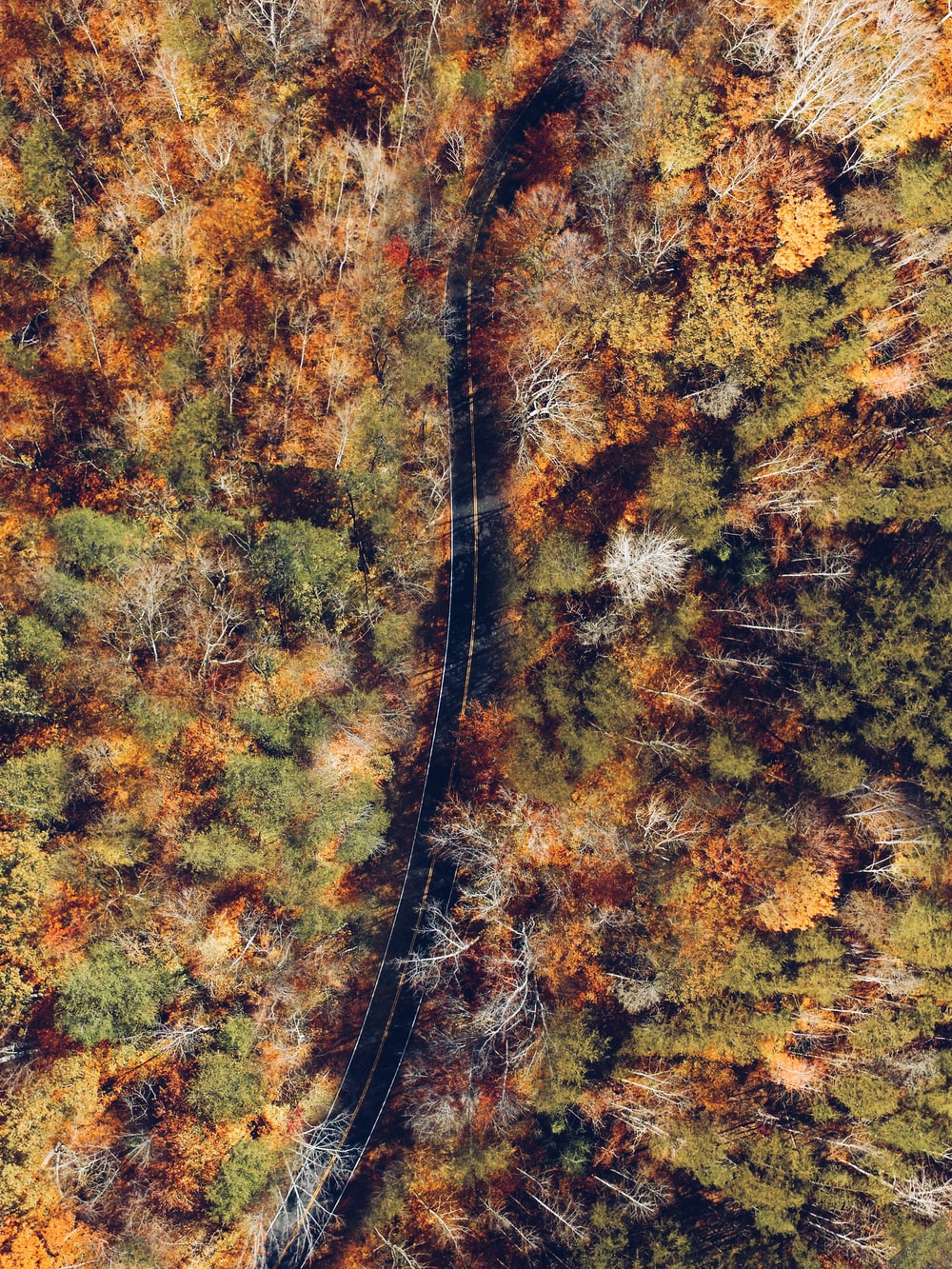 aerial photography of black road top surrounded with trees during daytime