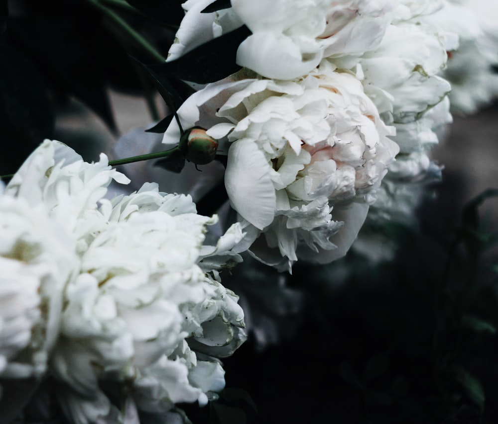 Flower Bloom Blosson And White Flower Hd Photo By Maria Maliy