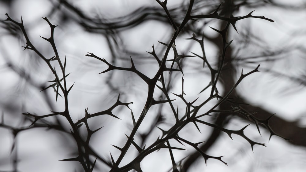 grayscale photography of naked stem