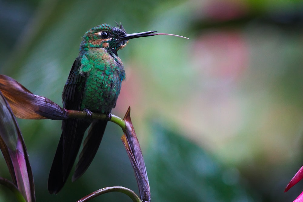 green and brown hummingbird perched on plant branch