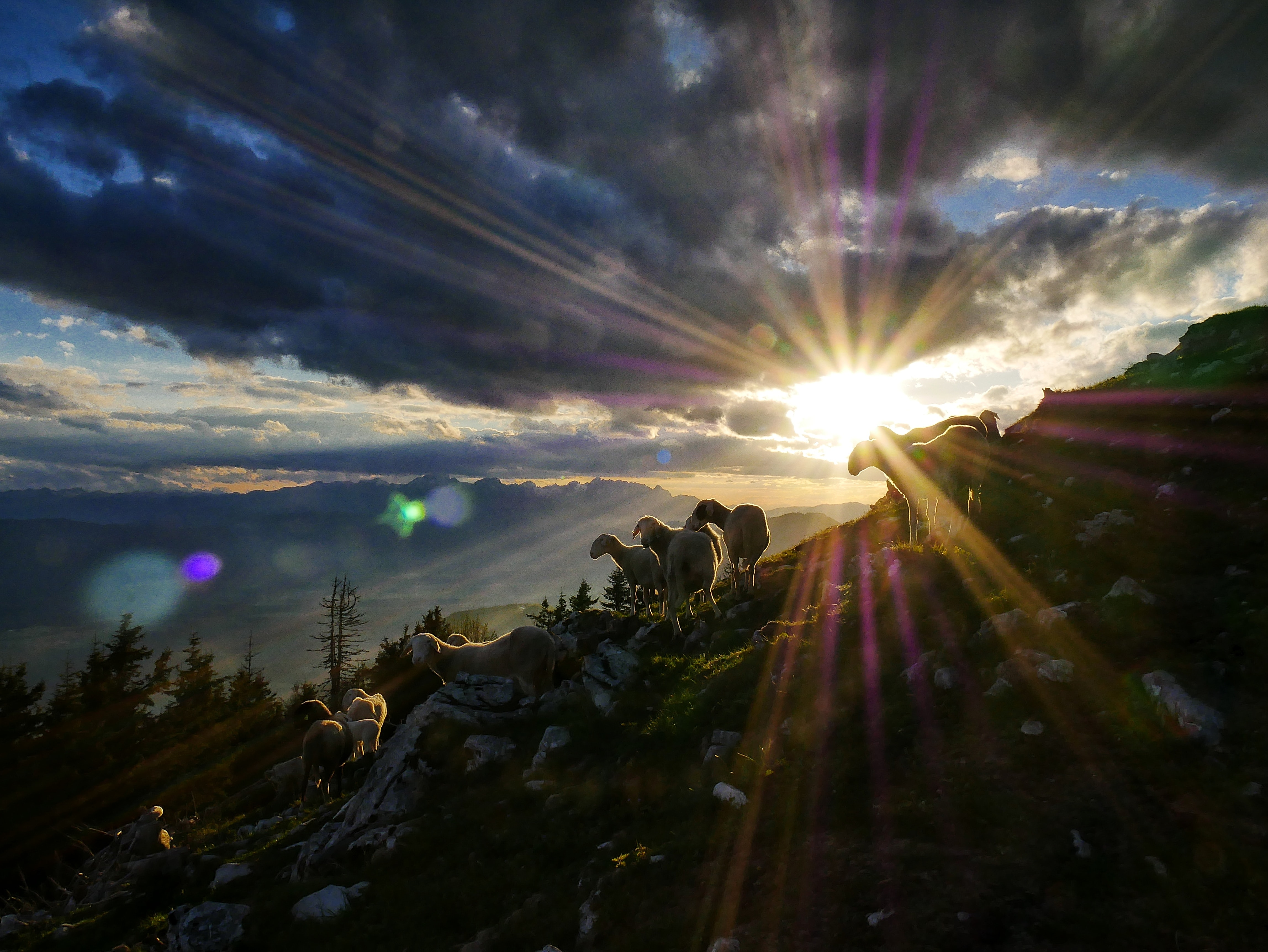 sun rays peak through clouds over herd of goats on hill