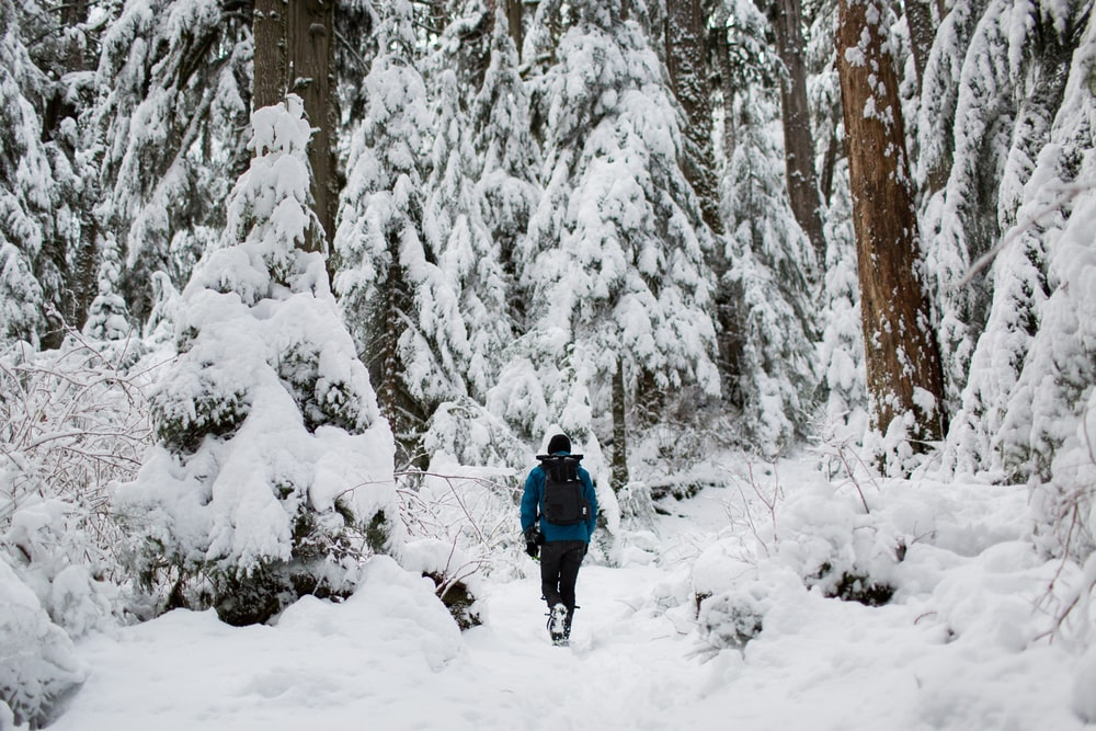 person walking on snow surrounded by trees
