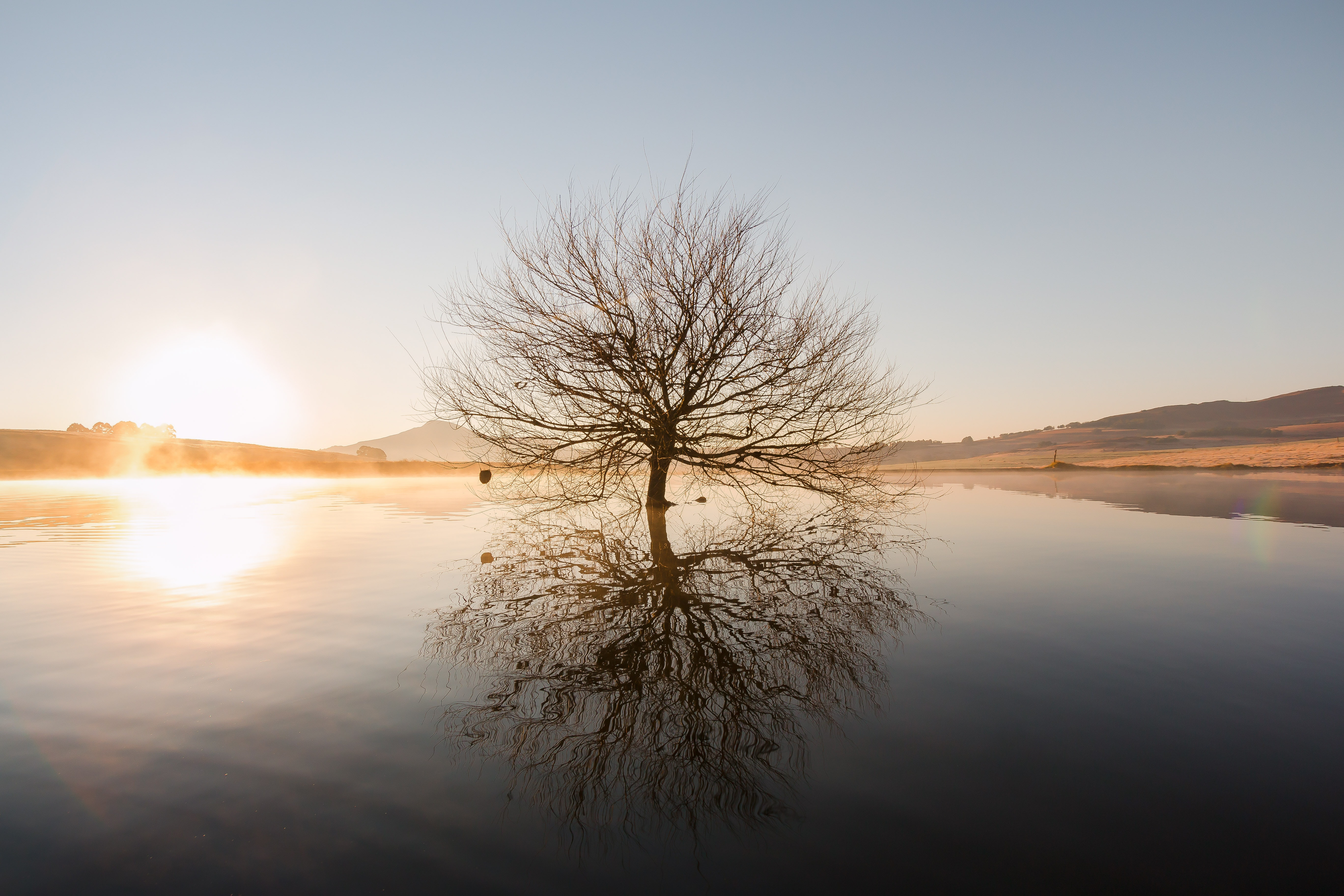 silhouette of withered tree in the middle of water