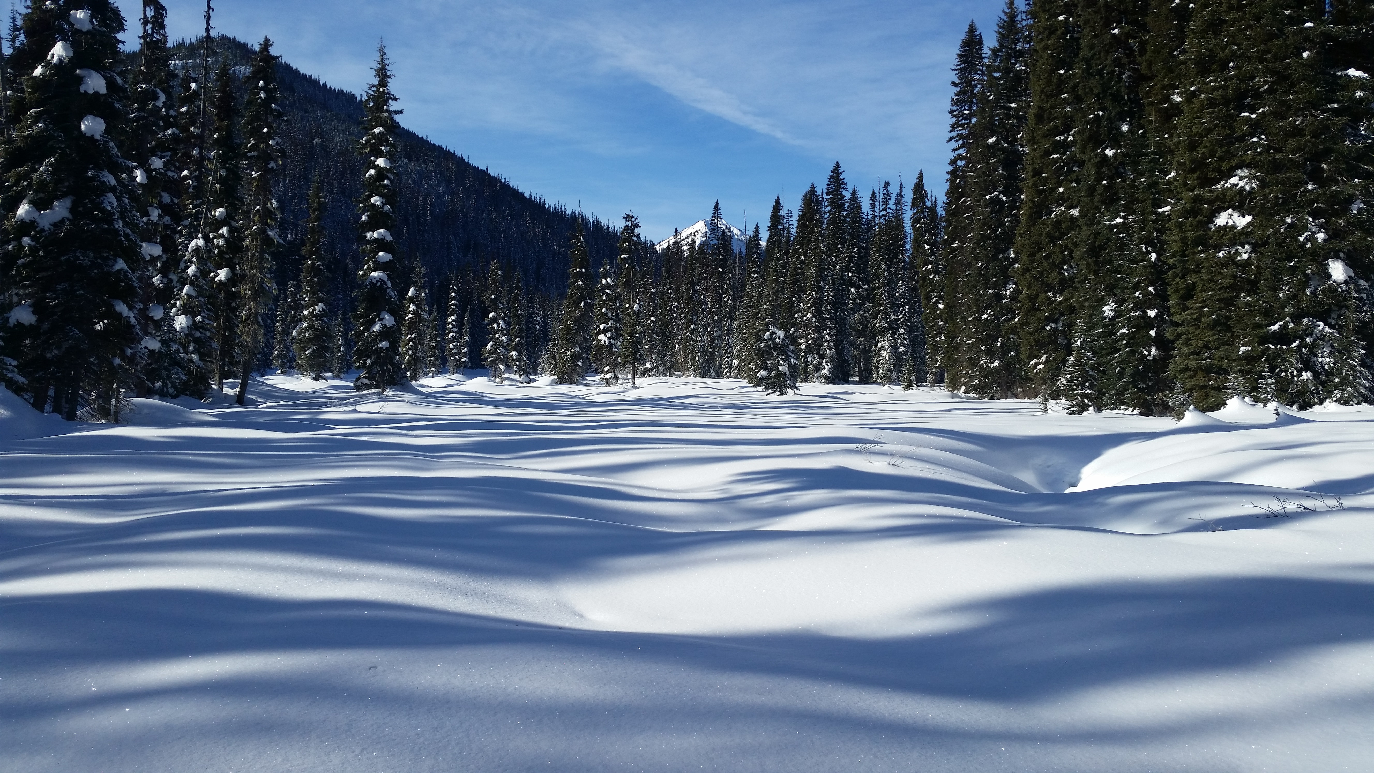 snow covered terrain with pine trees
