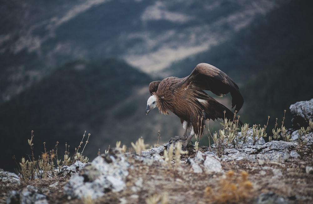 brown bird standing on ground near mountain at daytime