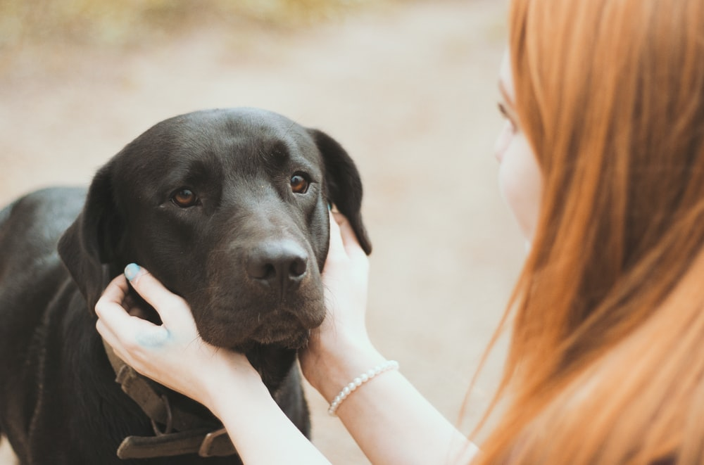 woman holding adult black Labrador