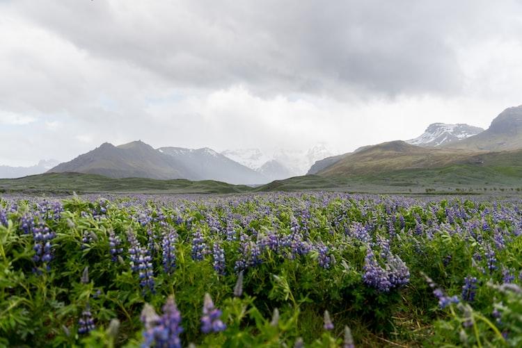 Visit Arctic Botanical Gardens, 10 things to do in Akureyri