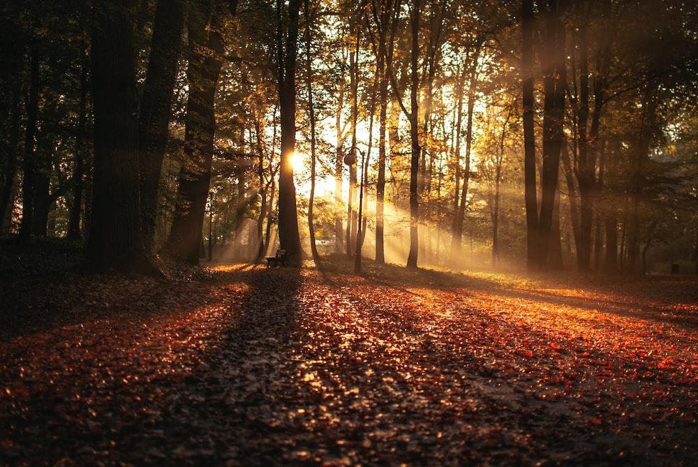 forest against sunlight at daytime