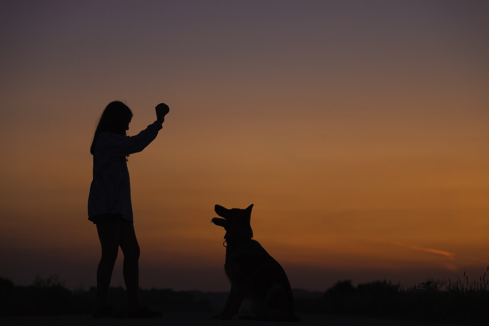 woman holding ball in front of dog silhouette photography