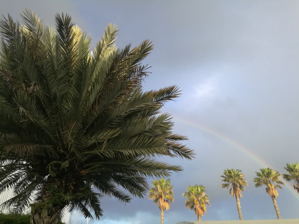 low-angle photography of green palm trees under gray clouded sky with rainbow during daytime
