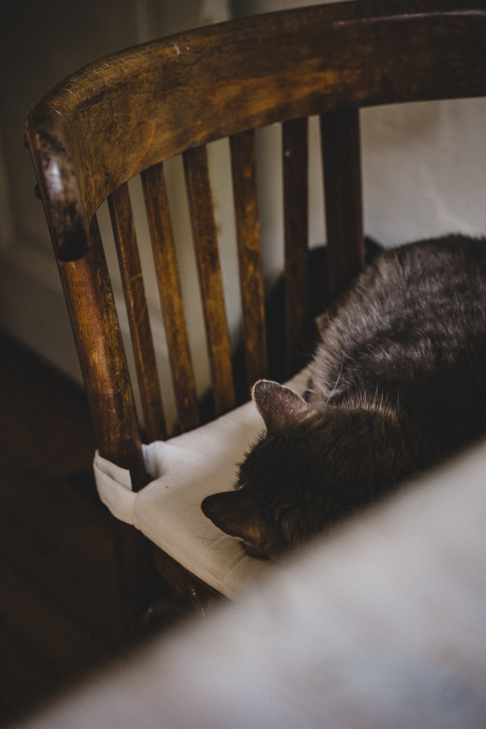 gray cat sleeping on high-back chair