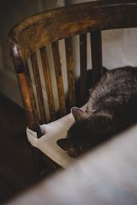 gray cat sleeping on high-back chair