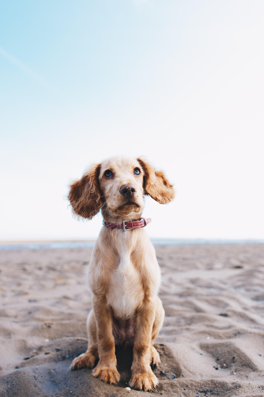 """Come insegnare il comando """"resta"""" al cane"""