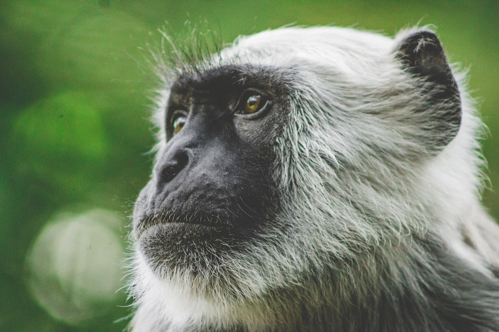 shallow focus photography of white monkey