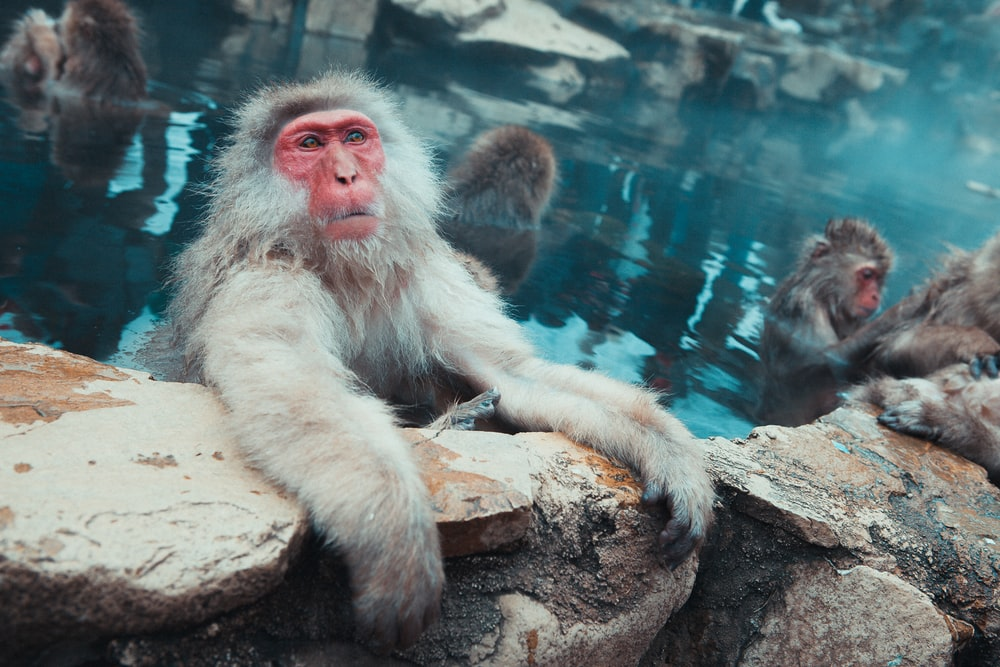 monkey on body of water at daytime