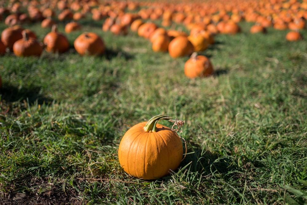 pumpkin fruit selective focal photo