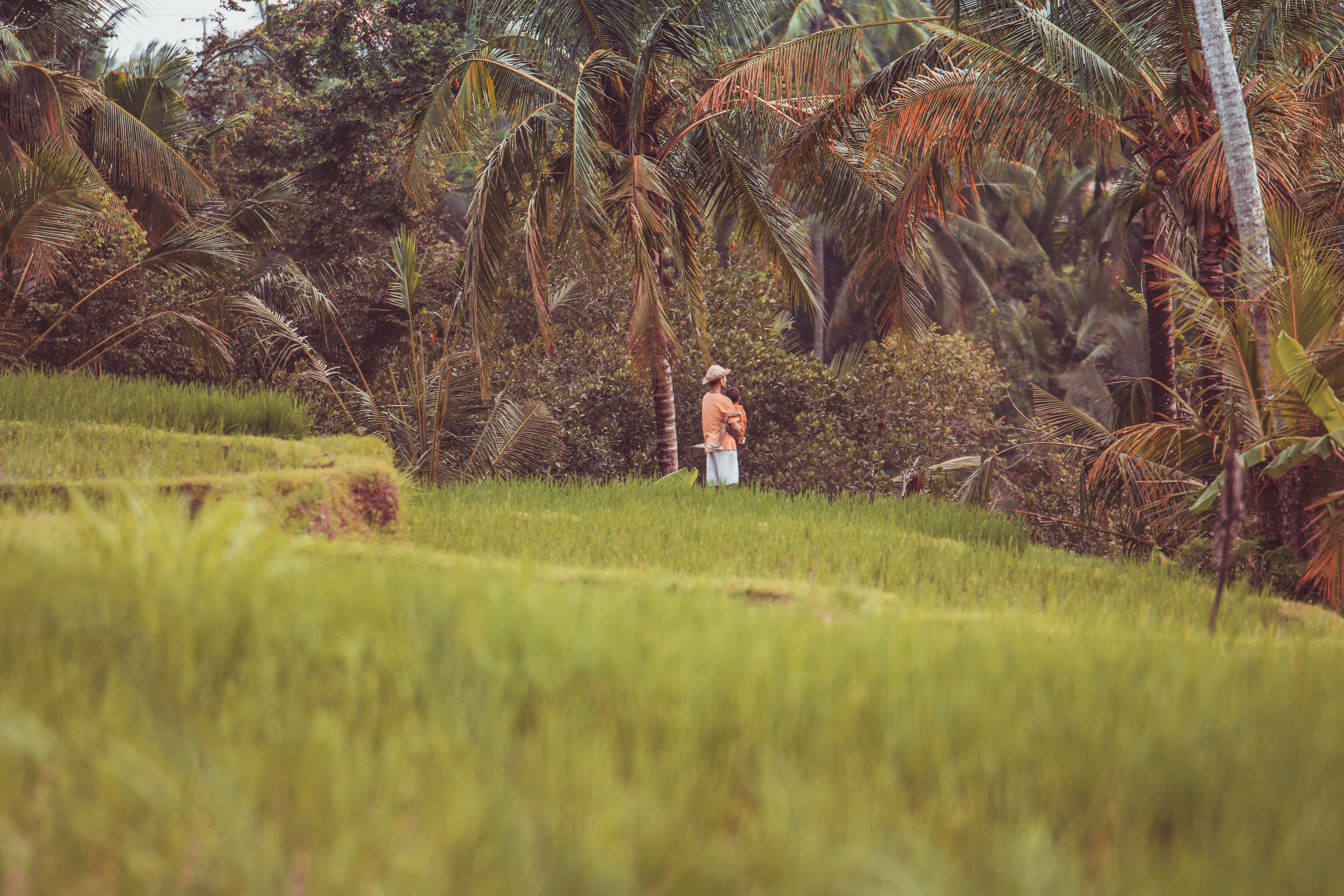 man wearing brown straw hat standing on hillside beside coconut tree selective focus photo