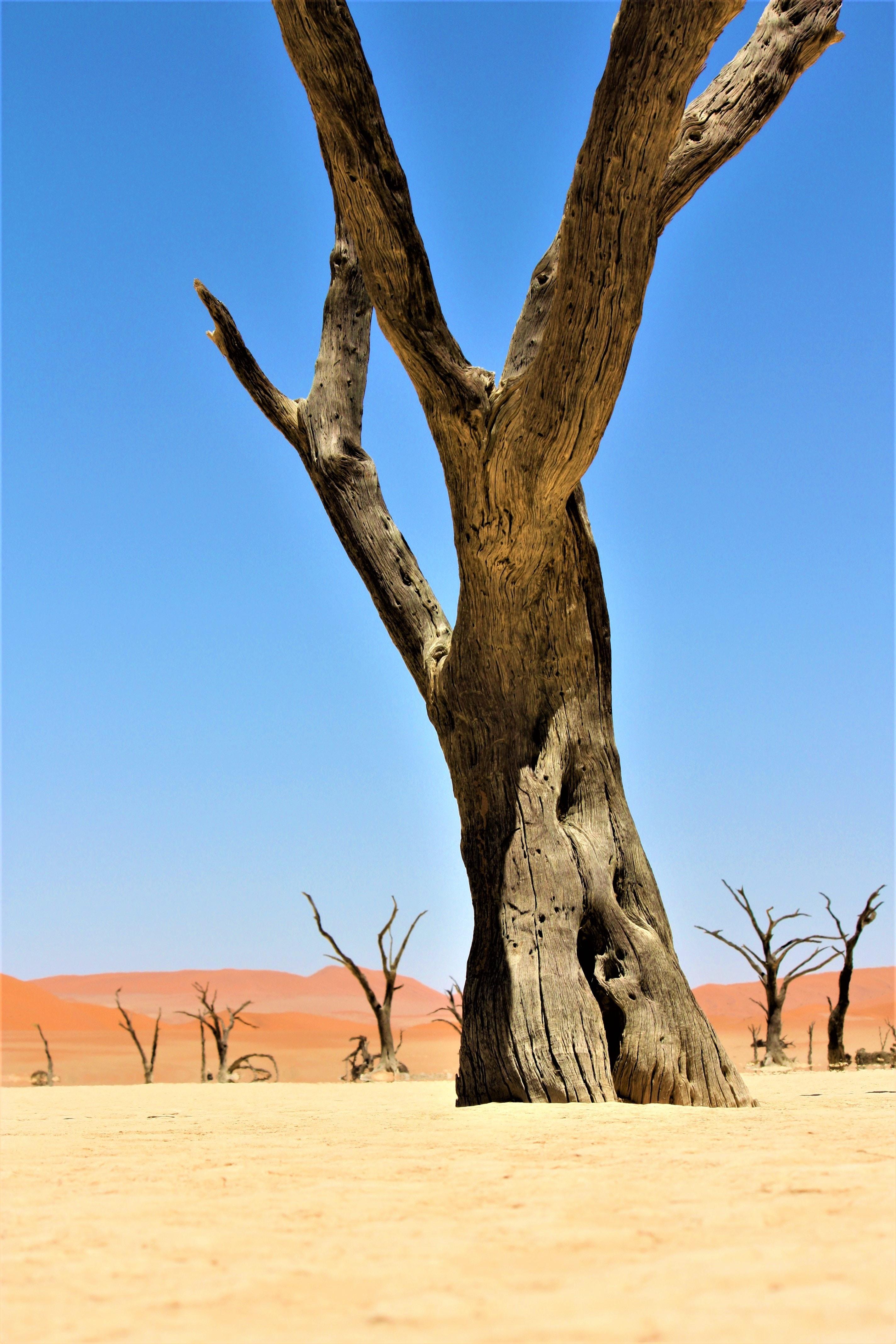 brown bare tree on desert during daytime