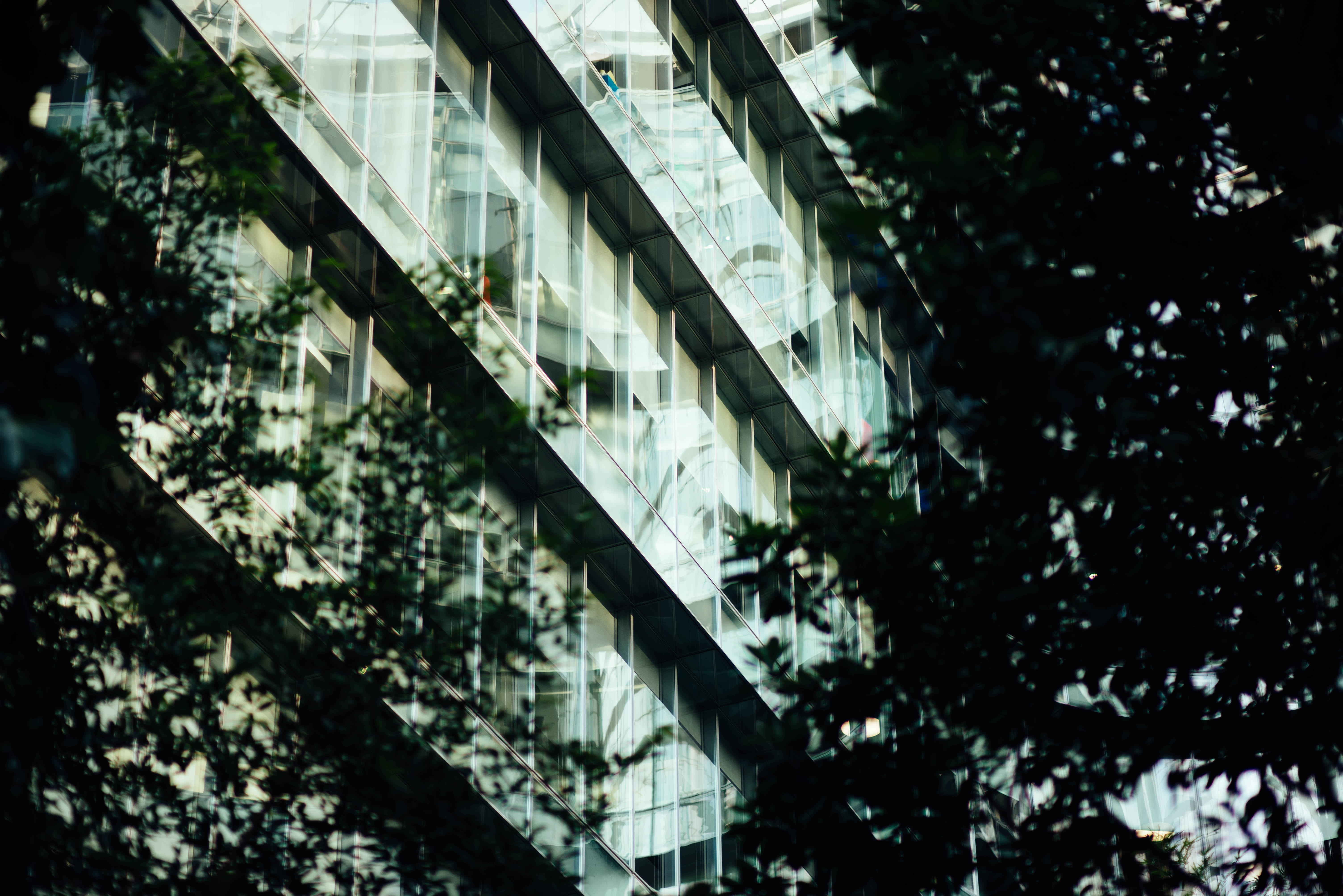 silhouette of trees near concrete building