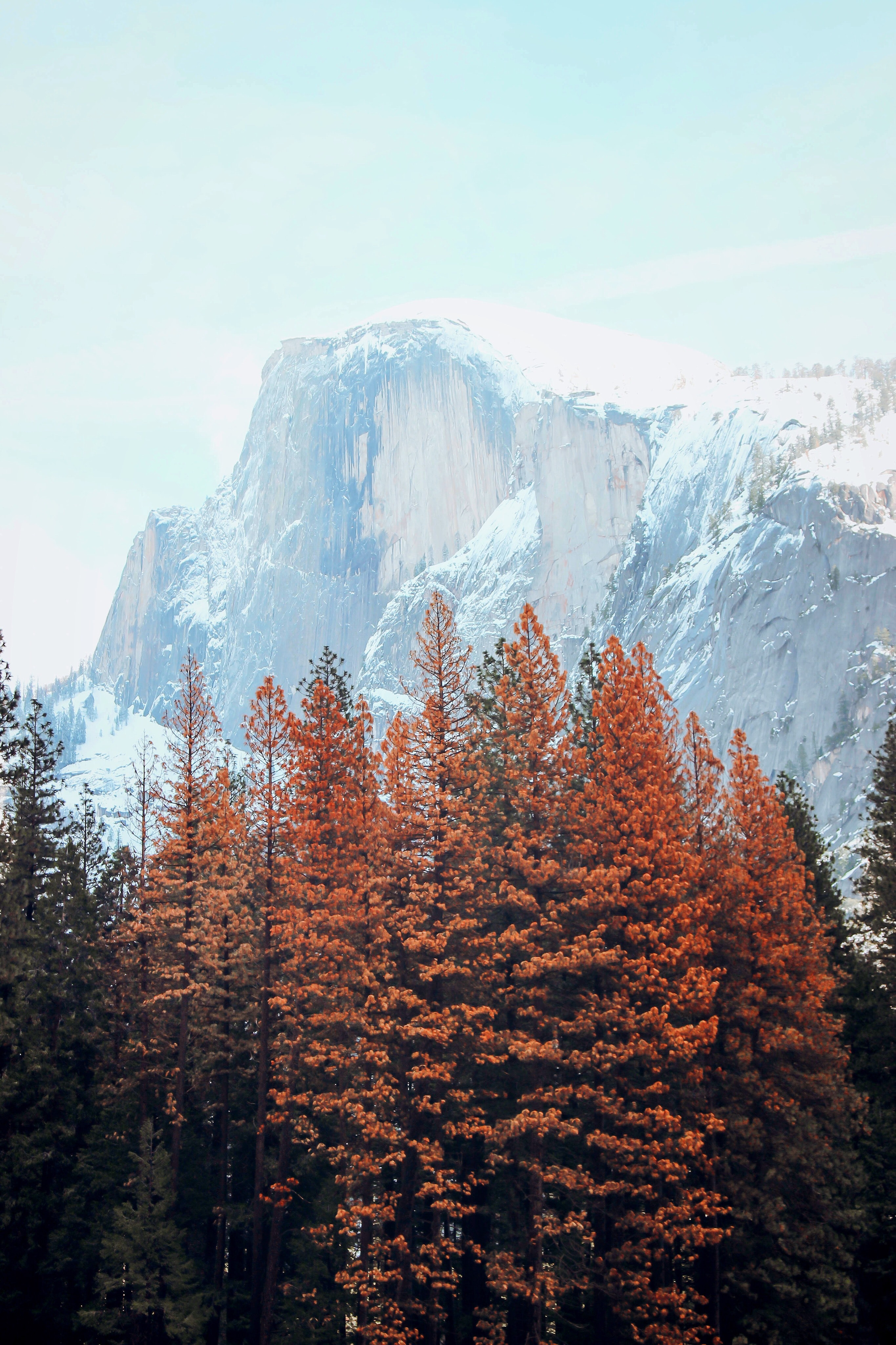 orange leafed trees with ice capped mountain background